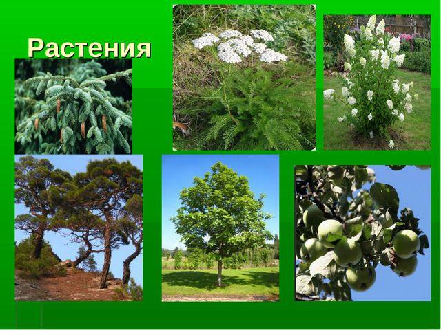 sochinenie-na-temu-listya-u-rasteniya-v-zhizni-cheloveka