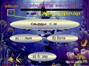 в) бұзау б) бота а) құлын 40 Ойынды жалғастыру Сиырдың төлі