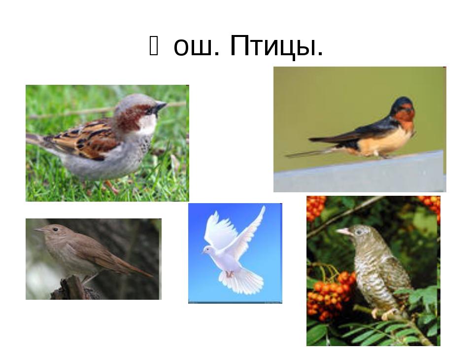 Ҡош. Птицы.