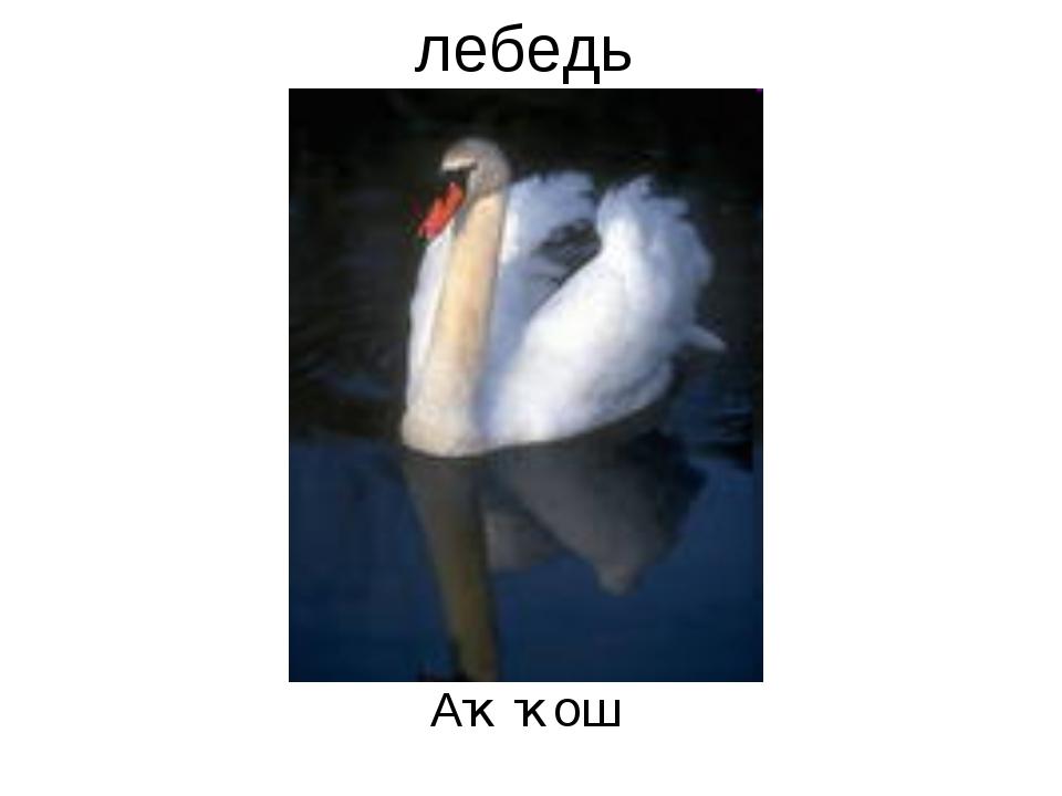 лебедь Аҡ ҡош