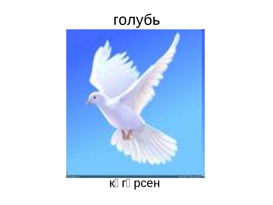 голубь күгәрсен