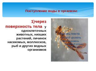 1)через поверхность тела у одноклеточных животных, низших растений, личинок н