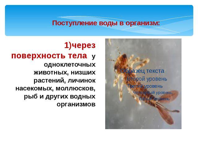 1)через поверхность тела у одноклеточных животных, низших растений, личинок н...