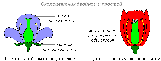 http://biouroki.ru/content/page/681/9.png