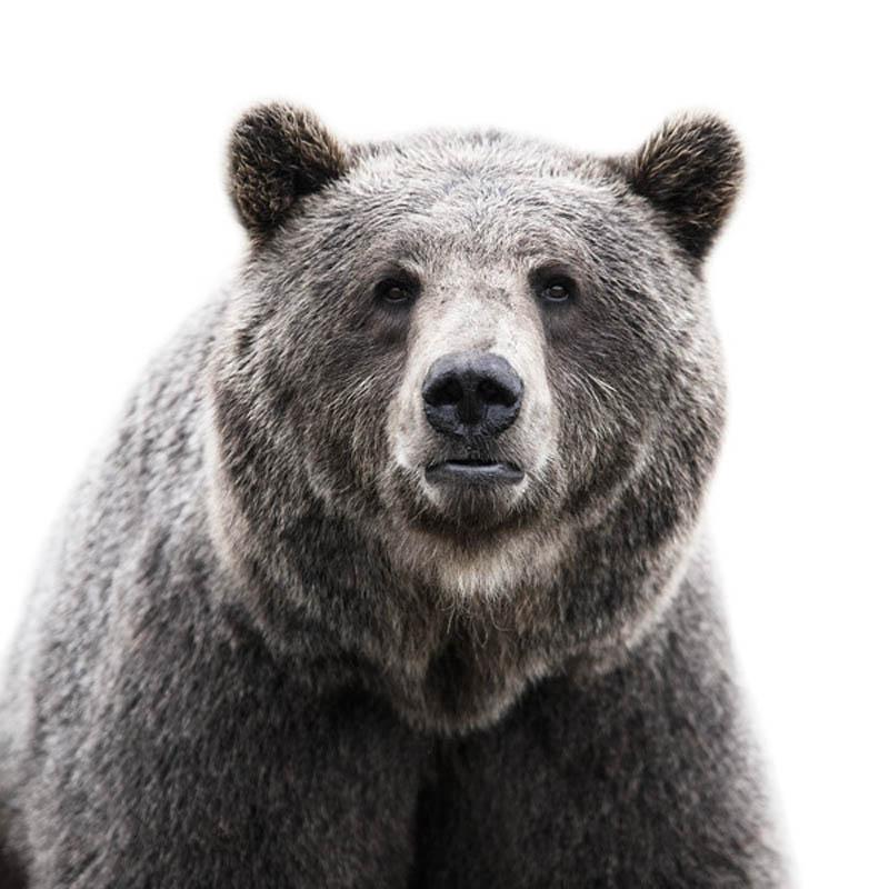 H:\вымершие\животные отредактированные\animal-portraits-by-morten-koldby-12.jpeg