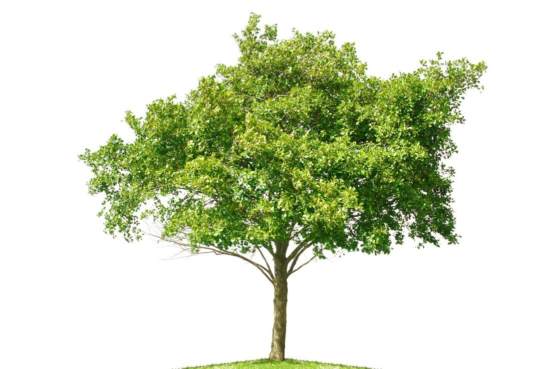 H:\вымершие\животные отредактированные\Plant-010-www.mehrad-co.com(L).jpg