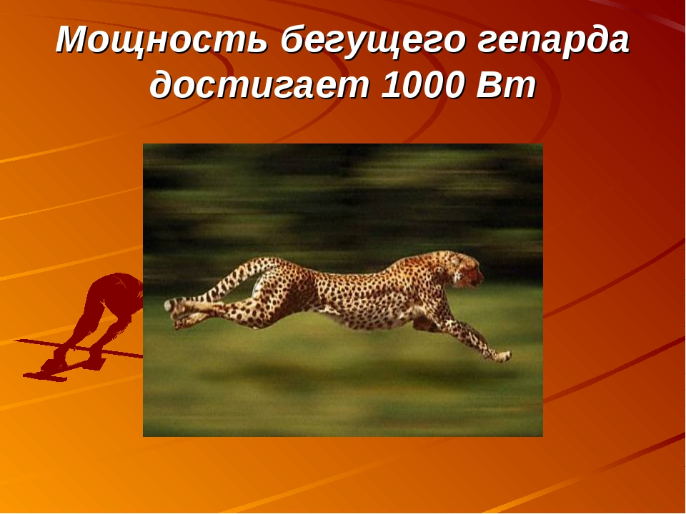 Мощность бегущего гепарда достигает 1000 Вт