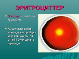 ЭРИТРОЦИТТЕР Эритроцит - қызыл қан түйіршіктері Қызыл жасушалар қанға қызыл т
