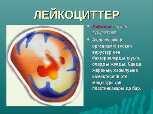 ЛЕЙКОЦИТТЕР Лейкоцит - ақ қан түйіршіктері Ақ жасушалар организмге түскен вир