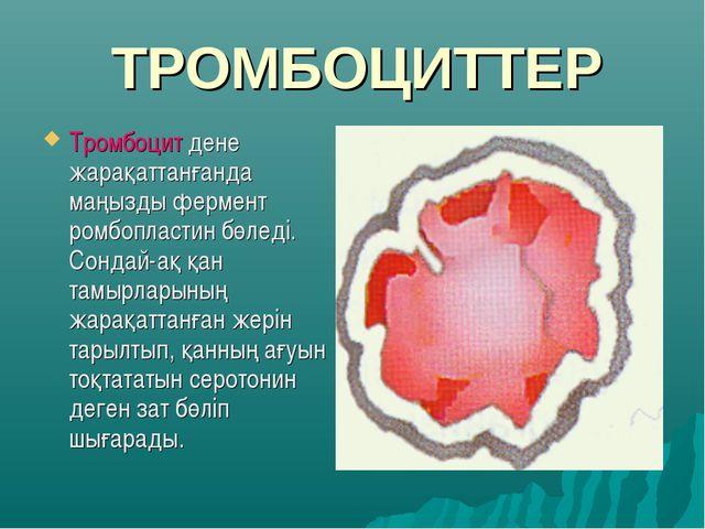 ТРОМБОЦИТТЕР Тромбоцит дене жарақаттанғанда маңызды фермент ромбопластин бөле...