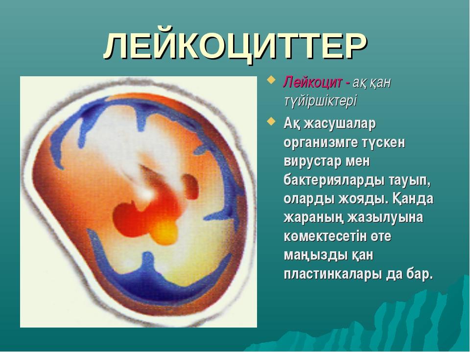 ЛЕЙКОЦИТТЕР Лейкоцит - ақ қан түйіршіктері Ақ жасушалар организмге түскен вир...
