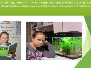 Я выбрала эту тему потому, что гуппи – очень популярные обитатели аквариумов