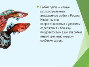 Рыбки гуппи — самые распространенные аквариумные рыбки в России. Известны они
