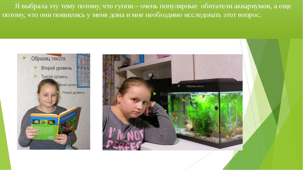 Я выбрала эту тему потому, что гуппи – очень популярные обитатели аквариумов...