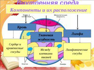 Внутренняя среда организма Компоненты и их расположение Кровь Тканевая жидкос