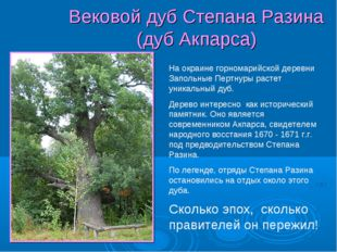 Вековой дуб Степана Разина (дуб Акпарса) На окраине горномарийской деревни За