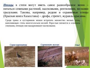 Среди травы и кустарников можно встретить множество мелких птиц, наполняющих