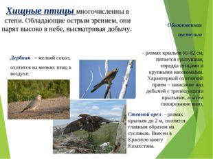Обыкновенная пустельга – размах крыльев 65-82 см, питается грызунами, изредка
