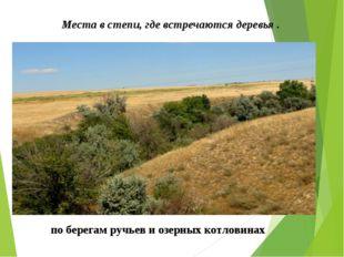Места в степи, где встречаются деревья . по берегам ручьев и озерных котлови