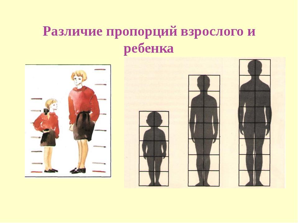 Различие пропорций взрослого и ребенка