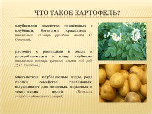 клубнеплод семейства паслёновых с клубнями, богатыми крахмалом (толковый слов