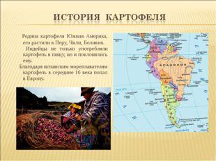 Родина картофеля Южная Америка, его растили в Перу, Чили, Боливия. Индейцы н