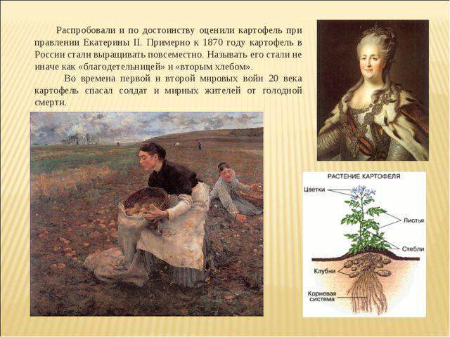 Распробовали и по достоинству оценили картофель при правлении Екатерины II....