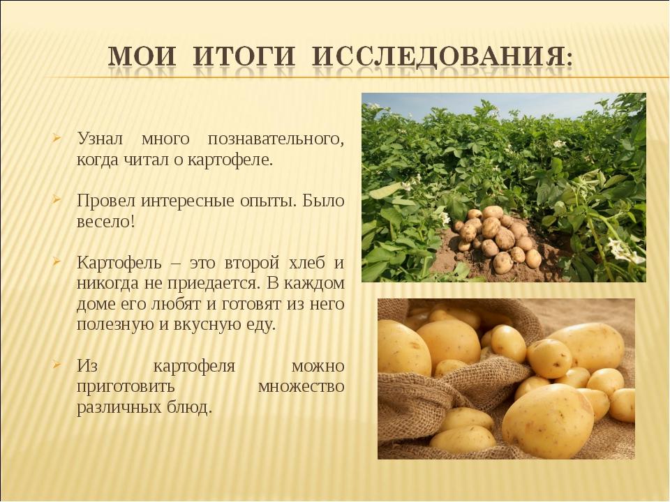 Узнал много познавательного, когда читал о картофеле. Провел интересные опыты...