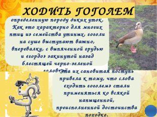 Греческое по происхождению восклицание «Эврика!» употребляется как выражение