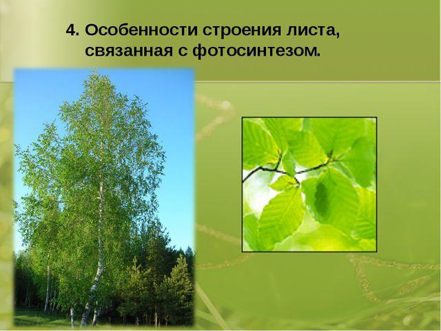 4. Особенности строения листа, связанная с фотосинтезом.