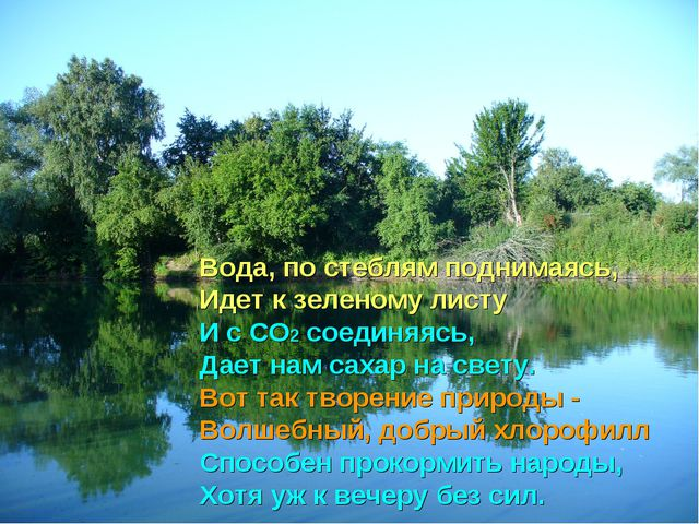 Вода, по стеблям поднимаясь, Идет к зеленому листу И с СО2 соединяясь, Дает н...