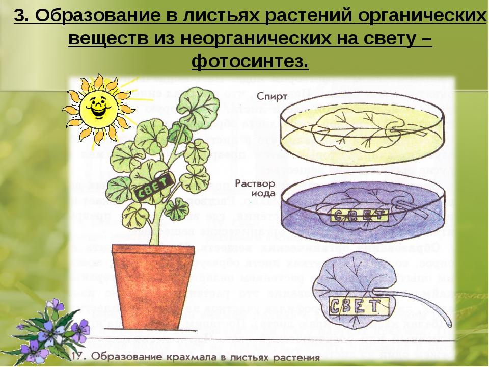 3. Образование в листьях растений органических веществ из неорганических на с...