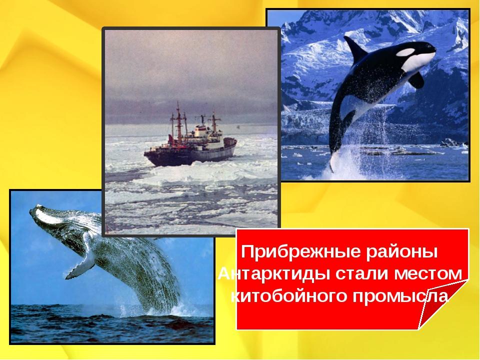 Прибрежные районы Антарктиды стали местом китобойного промысла