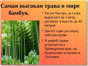 Самая высокая трава в мире Растет быстро, за сутки вырастает на 1 метр, дости