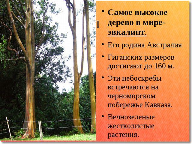 П Самое высокое дерево в мире-эвкалипт. Его родина Австралия Гиганских размер...