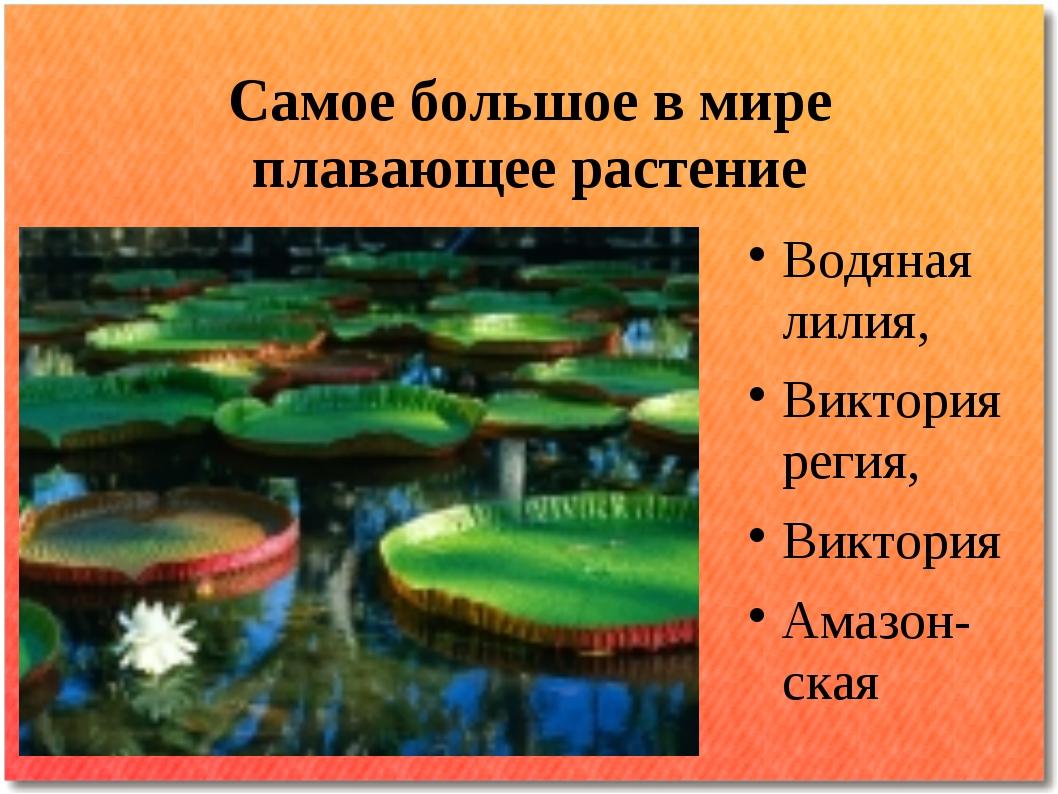 Самое большое в мире плавающее растение Водяная лилия, Виктория регия, Виктор...