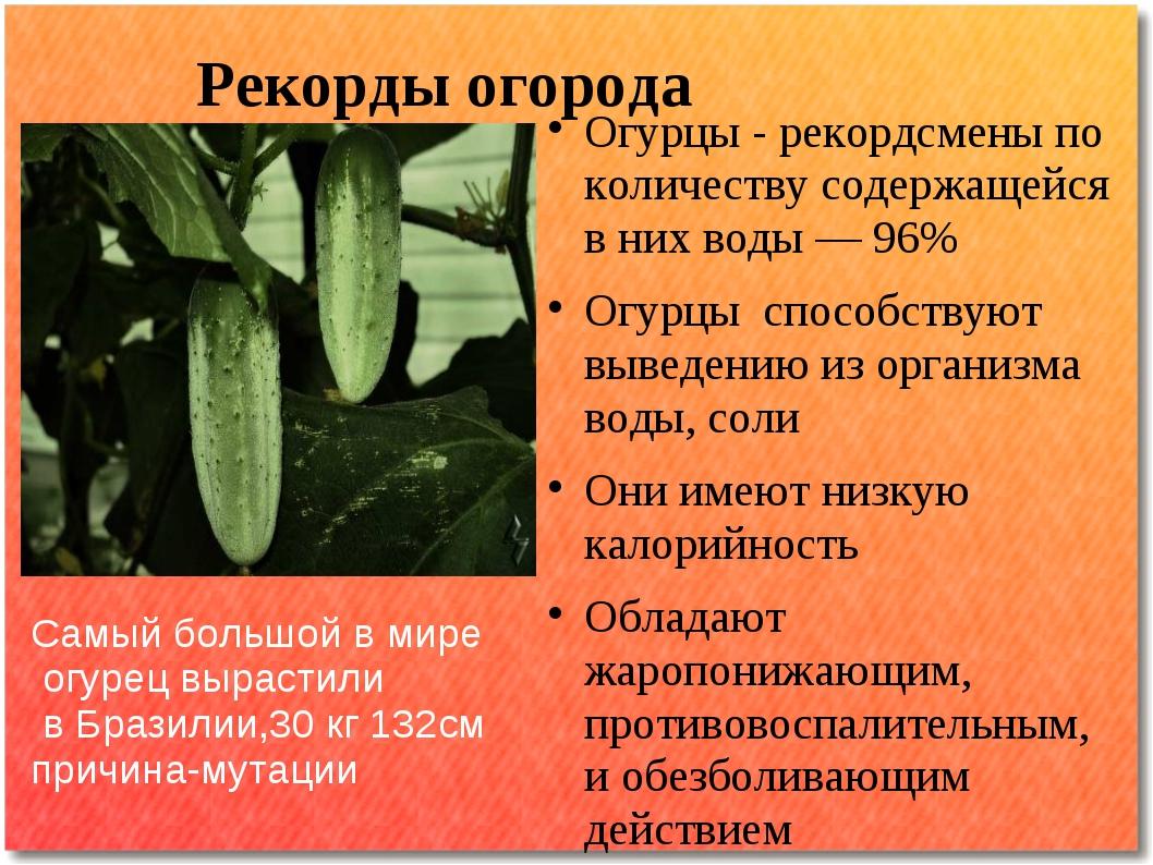 Рекорды огорода Огурцы - рекордсмены по количеству содержащейся в них воды —...