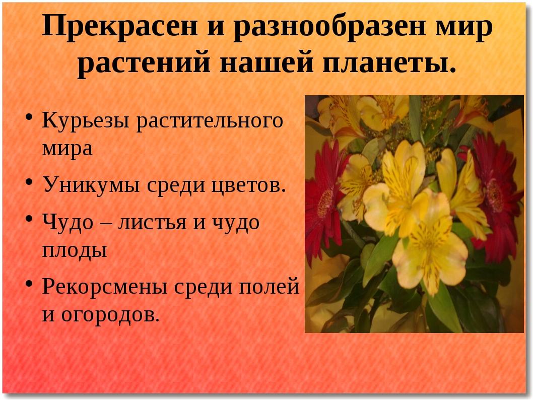 Прекрасен и разнообразен мир растений нашей планеты. Курьезы растительного ми...