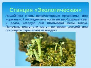 Станция «Экологическая» Лишайники очень неприхотливые организмы. Для нормальн