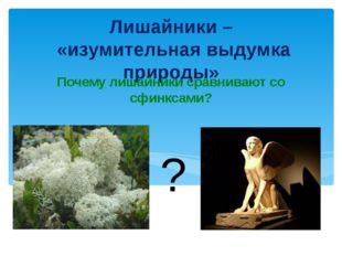 Лишайники – «изумительная выдумка природы» Почему лишайники сравнивают со сфи