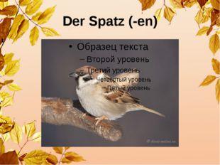 Der Spatz (-en)