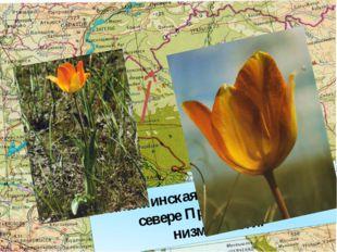 Финайкинская степь находится на севере Прикаспийской низменности.