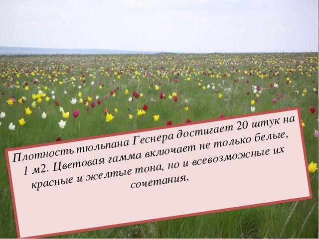 Особую привлекательность северная полупустыня приобретает в начале мая во вре...