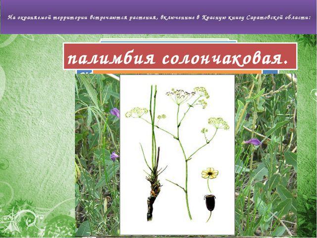 На охраняемой территории встречаются растения, включенные в Красную книгу Са...