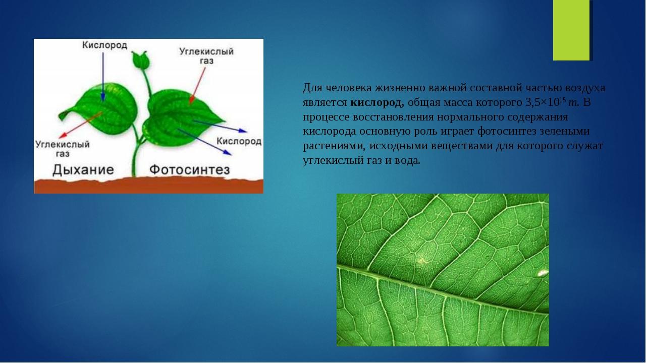 Для человека жизненно важной составной частью воздуха являетсякислород,обща...