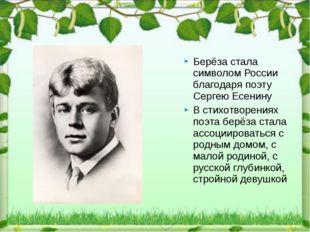 Берёза стала символом России благодаря поэту Сергею Есенину В стихотворениях