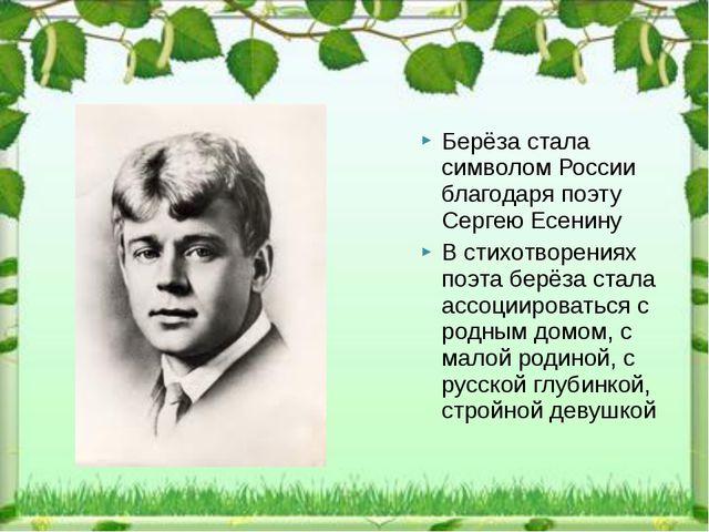 Берёза стала символом России благодаря поэту Сергею Есенину В стихотворениях...