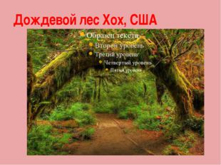 Дождевой лес Хох, США