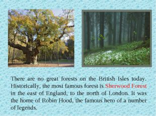 There are no great forests on the British Isles today. Historically, the most