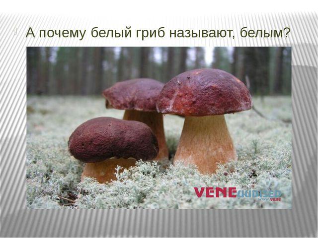 А почему белый гриб называют, белым?